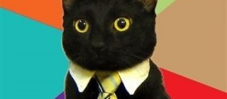business-cat-on-reports-photo-u1