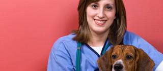veterinary, animal clinics