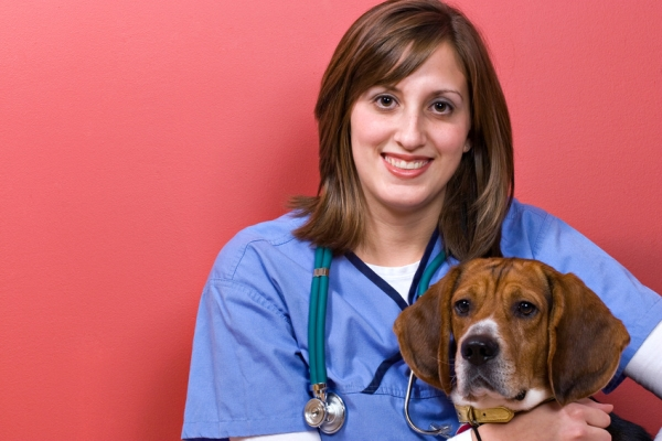 veterinary, animal clinics
